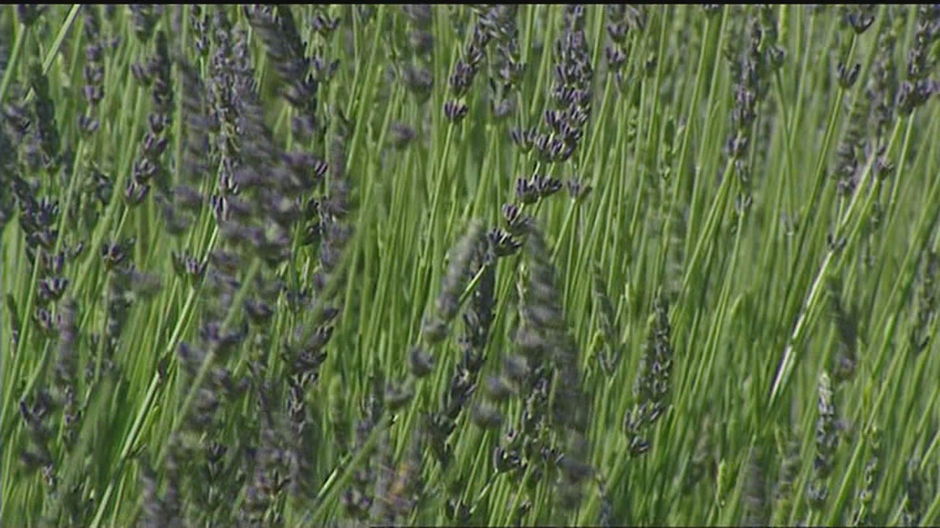 nine plants that bug bugs wfmynews2 com
