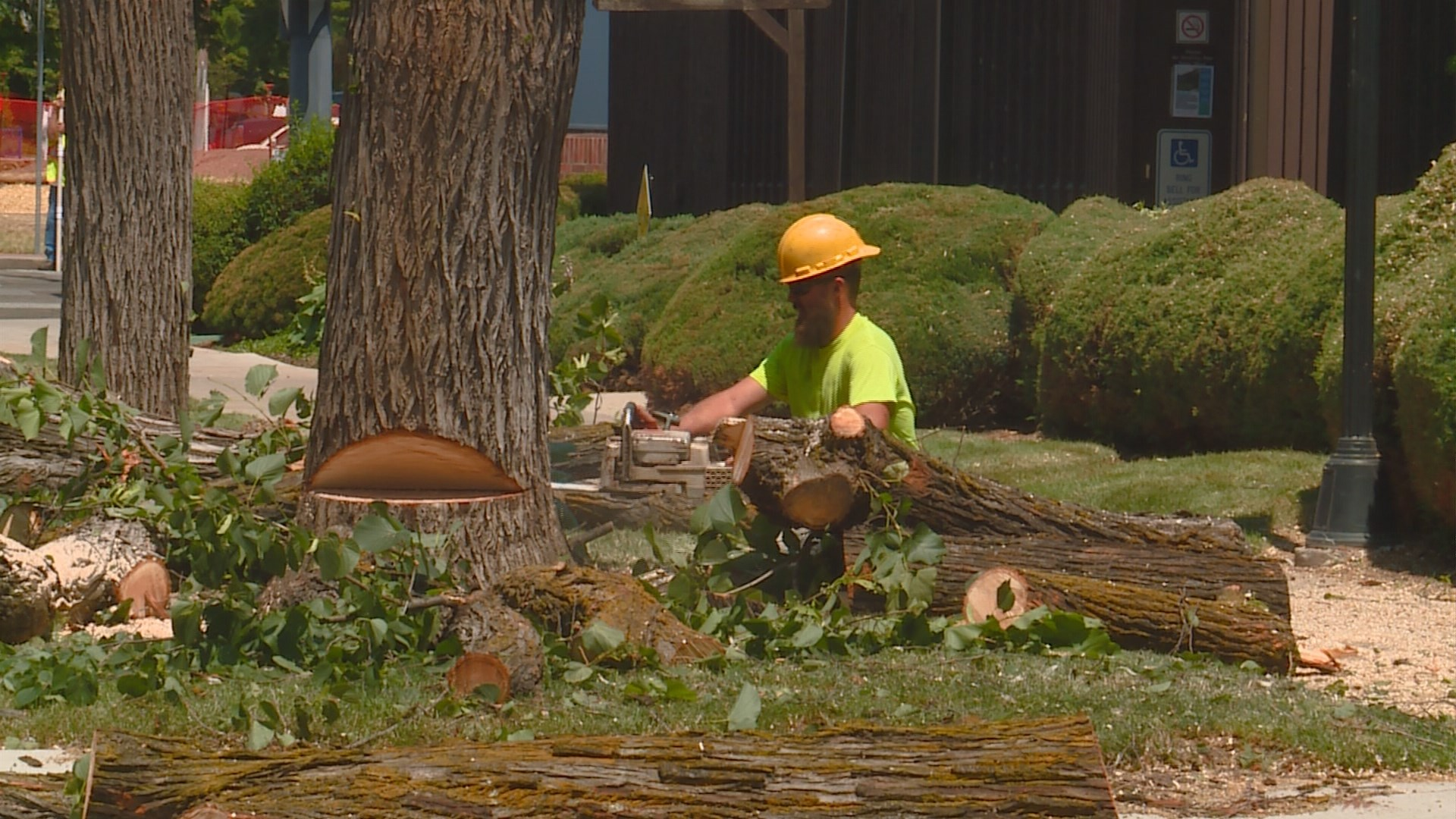 64 Trees Being Cut Down To Make Way For Fort Boise St